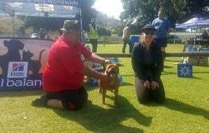 Gaby Winning Reserve best puppy in show.