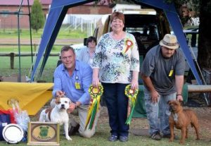NWSBT Club Champ Show G aby reserve puppy.