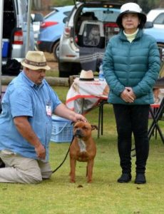 Northerntswane KC Champ Show Gaby Reserve puppy.